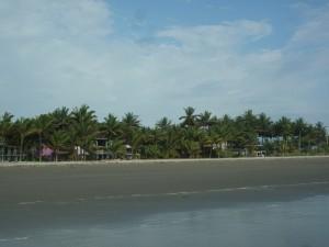 Palmen-Muisne-Praktikum-Freiwillige-Freiwilligendienst-HilfevorOrt-Ecuador-Strand